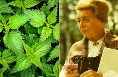 """""""Ha az emberek tudnánk, mennyi gyógyhatása van a csalánnak, csak csalánt termesztenének"""" – Maria Treben Natural Health Remedies, Herbalism, Herbs, Marvel, Nature, Origami, Varicose Veins, Plant, Herb"""