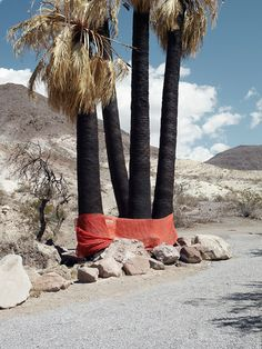 Untitled (Scorched Palms) by Michael Bodiam
