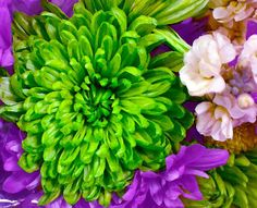 Blooming Bouquet by Deena Stoddard #flowers