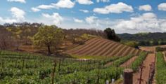 Paso Robles  http://www.cheers-2-wine.com/central-coast-wine-tasting-coupons/