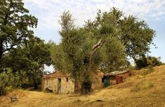 Olivenbaum Fotos & Bilder auf fotocommunity House Styles, Saints, Romantic Photos, Morning Light, Olive Tree, Old Trees, New Day, Simple Paintings