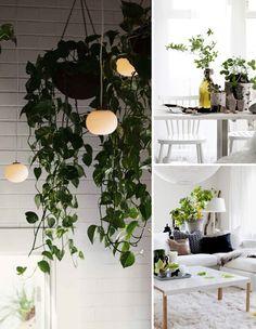 nature inside #decor