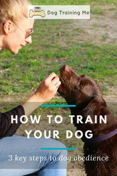 Cat Training Biting Learn how to train your dog with these 3 key steps to dog obedience. Put yourself back and charge and say goodbye to all the headaches of an untrained dog. Make training your dog a joy by reading the tips in our article now. Training Your Puppy, Brain Training, Dog Training Tips, Potty Training, Leash Training, Dog Minding, Easiest Dogs To Train, Dog Training Techniques, How To Train Your