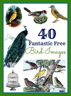 40 Favorite Bird Images - The Graphics Fairy