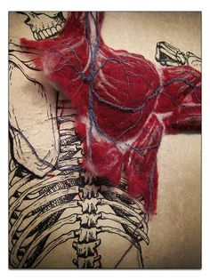 Systems, by Dan Beckemeyer. An illustrated skeletal system with stitched cardiovascular system and hand felted muscle mass all on hand-made abaca paper.