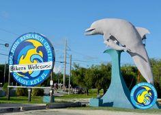 Dolphin Research Center - Marathon, FL - Kid friendly activity reviews - Trekaroo