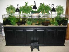 turtle tanks – Google Search (I love the plants over the tank…)