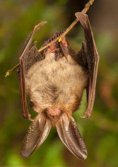 Elegant Bat In Basement How Catch It