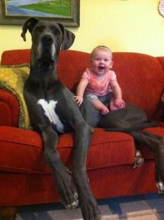 One Happy Baby and her rather Large Pet Dog