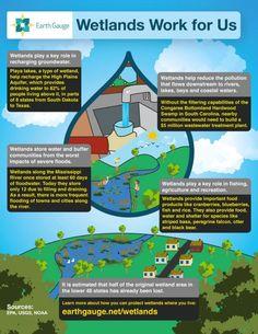 Wetlands Work for Us infographic via EarthGauge.net