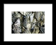 Product Framed Print featuring the photograph The Protector by Vanessa Branton