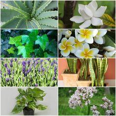¿Insomnio? Pon estas plantas en tu habitación y asunto solucionado | Plantas