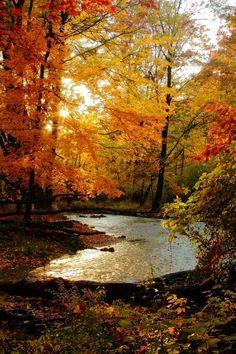 Autumn stream water outdoors trees autumn leaves