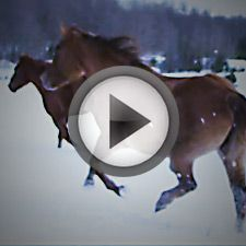 This video is sure to get you pumped for the show! #fasterhorses #teaservideo