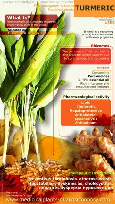 Turmeric benefits. Infographic. Summary of the general characteristics of the Turmeric plant. Medicinal properties, benefits and uses more common of Turmeric rhizomes. http://www.medicinalplants-pharmacognosy.com/herbs-medicinal-plants/turmeric-benefits/health-properties-infographic/