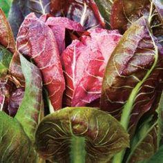 Quand semer les légumes  de l'automne et de l'hiver