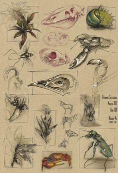 dynamic animal sketches - Google Search