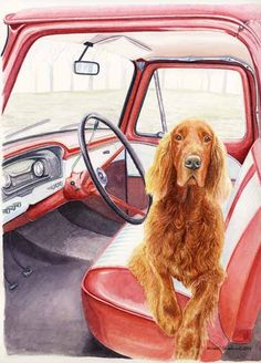 This reminds me of our first Irish Setter, Penny.  Always ready to go for a ride in Dad's red truck.