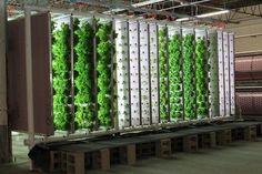 hydroponic garden design ideas vertical garden ideas vegetable garden herb garden