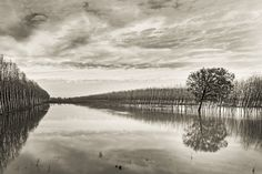 some trees and a triangle of land flooded near Pavia