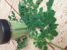 Juice Smoothie, Smoothies, Miracle Tree, Clean Eating, Healthy Eating, Thing 1, Organic Plants, Juicing, Vegetarian Recipes