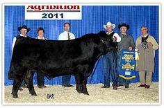 Davidson Gelbvieh Ltd : Bulls, farming, farming, service