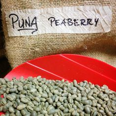 """True story: the first time we sent a coffee to #CoffeeReview it was our Puna Kazumura Peaberry. They'd never tasted a #Hawaiiancoffee like it and asked us to verify that it was legitimately grown here. After we sent them our green bean to inspect this the review they gave: """"This would be a striking and unusual coffee from anywhere in the world but it is a particular surprise coming from Hawaii where sweetness and balance are the positive norm rather than the startling aromatic originality of…"""