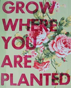 grow where you are planted: this is hard sometimes you just want to run away wonder what if and should I  have... but in reality where you are no is where your suppose to be and this is where you need to start to grow. if things happen, people fall away, at least you know your on a firm foundation deeply rooted ...
