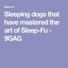 Sleeping dogs that have mastered the art of Sleep-Fu - 9GAG