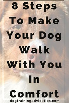 Dog Grooming Cocker Spaniel 8 Steps To Make Your Dog Walk With You In Comfort. Grooming Cocker Spaniel 8 Steps To Make Your Dog Walk With You In Comfort. Dog Training Come, Basic Dog Training, Leash Training, Dog Training Videos, Training Your Puppy, Training Collar, Training Classes, Dog Breeders Near Me, Easiest Dogs To Train