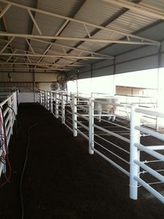 Want!!! Barn Stalls, Horse Stalls, Horse Barns, Show Cattle Barn, Cattle Trailers, Barn Layout, Shed Floor Plans, Horse Barn Plans, Cattle Farming