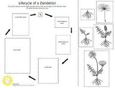 FREE Plant Life Cycle Printables~ Two cut-n-paste