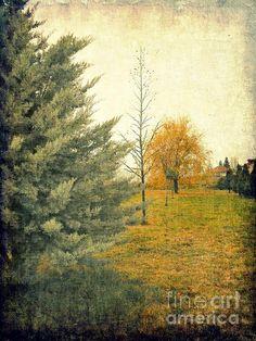 """Three Trees In A Row"" by Ioanna Papanikolaou on fineartamerica.com"