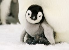 Google Rolls Out Latest Penguin Algorithm Update, and Other Marketing Stories of the Week Small Business Marketing, Online Business, Polar Animals, Cute Animals, Emperor Penguin, Inbound Marketing, Social Media Marketing, Google Penguin, Social Media Images