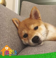 Hasta mañana 🌙  #PetsWorldMagazine #RevistaDeMascotas #Panama #Mascotas #MascotasPanama #MascotasPty #PetsMagazine #MascotasAdorables #Perros #PerrosPty #PerrosPanama #Pets #PetsLovers #Dogs #DogLovers #DogOfTheDay #PicOfTheDay #Cute #SuperTiernos