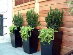 décoration de terrasse avec de grands pots design