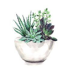Some flowers to you #flowers #watercolor #draw #drawing #succulents #album