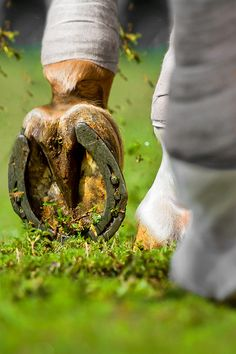cool shot!  Detail... by Raphael Macek - Horse Photography, via Flickr