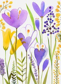 primrose & other wildflowers