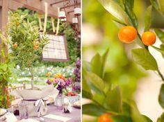 Orange tree centerpieces