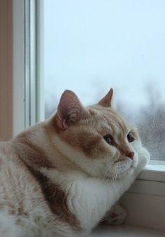 「 やる気スイッチが見当たらない。動いたら負け。脱力全開の犬猫画像 」の画像|音史のブログ|Ameba (アメーバ)