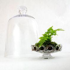 Five Great Indoor Ferns Indoor Garden Boston Fern & moss under a large by TallPoppyGardens, $60.00