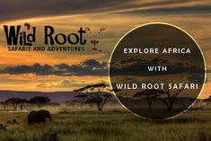 Tanzania Experience - Wild Root Safaris is a tour company that specializes in Tanzania Safaris and Tanzania Expedition. Enjoy Tarangire Park for game drives, Lake Manyara for game drives, Serengeti plains for game drives, Ngorongoro crater & coffee walking.