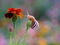 Close Up Photos of Snails  by Vyacheslav Mishchenko.