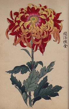 Orig Japanese Woodblock Print Book Chrysanthemum of Japan Vol1 Meiji