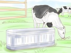 How to Determine How Many Head of Cattle Per Acre Are Required for Your Pastures -- via wikiHow.com