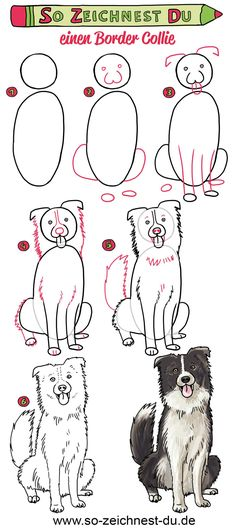 So zeichnest du einen Hund (Border Collie) This dog is not only fluffy and cute, but also very smart. Draw your own Border Collie with our step-by-step guide. Perros Border Collie, Border Collie Blue Merle, Border Collie Humor, Border Collie Puppies, Collie Dog, Border Collie Tattoo, Border Collie Art, Art Drawings Sketches, Animal Drawings