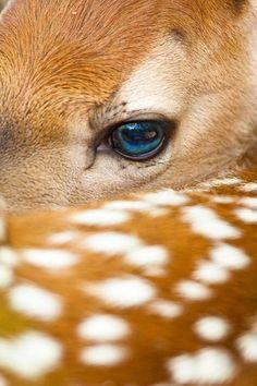 A baby whitetail deer in northern. funkysafari: A baby whitetail deer in northern Wisconsin. by jerry mercierfunkysafari: A baby whitetail deer in northern Wisconsin. by jerry mercier Nature Animals, Animals And Pets, Baby Animals, Cute Animals, Bambi, Oh Deer, Baby Deer, Beautiful Creatures, Animals Beautiful