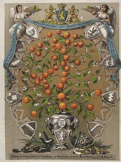 ORANGE-NASSAU GENEALOGICAL TREE | Flickr - Photo Sharing!