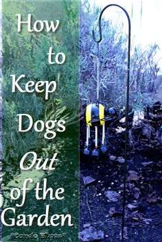 Charmant How To Keep Dogs Out Of The Garden